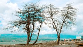 Artistic Trees Formed by Tsunami stock photos