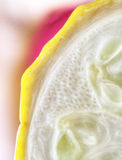 Artistic Vegetable Close Up Yellow Squash Stock Photography