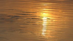 A golden sun path on a forest lake surface in Ukraine. An artistic view of a golden sun path on a forest lake surface in Ukraine. The waves drift slightly under stock video