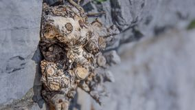 Artistic view of plant roots on the grey stone wall. Stock Photography