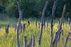 ARTISTIC EFFECT ADDED TO IMAGE OF OLD WOODEN POSTS STANDING IN GREEN GRASS. Artistic view of the wooden remnant of an old bridge in long green grass in sunlight stock photos