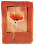 Artistic watercolor single poppy Stock Images