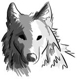 Artistic wolf face isolated Stock Photography