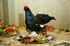 Artistically decorated with stuffed hunting birds capercaillie dish is a delicacy from the chef - a dish of venison. royalty free stock image