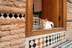 Artistically planlagt tegelplattaarbete i marockansk dörröppning med katten Royaltyfri Fotografi