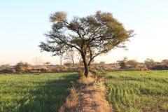 Artistiek gebladerte van een majestueuze boom op de gebieden royalty-vrije stock afbeelding