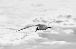 Artistieke foto die van wilde vogel in hemel vliegt Stock Foto