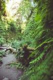 Artistieke nadruk en hoek van de vegetatie op de canionmuren langs de Fern Canyon-stijging in Californische sequoia Nationaal Par stock afbeeldingen