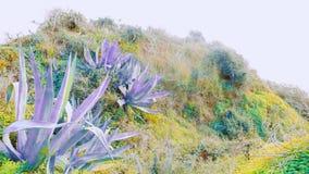 Artistieke Portugese kleurrijke installaties - royalty-vrije stock foto's