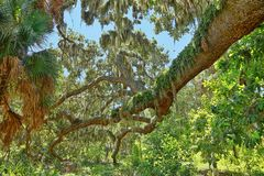 Arto di quercia fuori ramificato A di Fern Covering di resurrezione fotografie stock