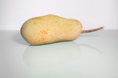 Artocarpus ακέραιος αριθμός ή γνωστός ως αρτόκαρποι ή jackfruit Στοκ Εικόνες