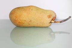Artocarpus ακέραιος αριθμός ή γνωστός ως αρτόκαρποι ή jackfruit Στοκ Φωτογραφίες