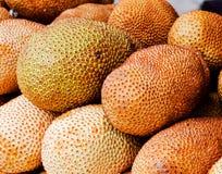 Artocarpus integer Royalty Free Stock Photos
