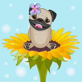 Сartoon Pug Dog Stock Photo