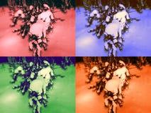 Artpopbeelden van bomen in de winter stock foto's