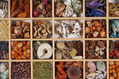 Arts & Crafts Display - Shells, Seeds Etc Royalty Free Stock Photography