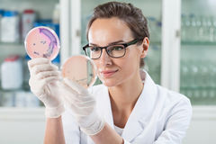 Arts die oplossing in petrischalen onderzoeken Stock Foto's