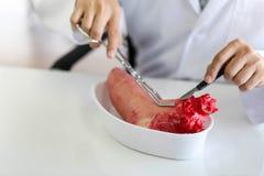 Arts die van geneeskunde anatomisch model in laboratorium onderzoeken royalty-vrije stock fotografie