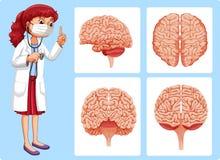 Arts en hersenen diagrammen Royalty-vrije Stock Foto's