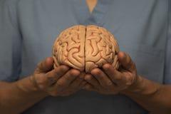 Arts en hersenen model Royalty-vrije Stock Afbeelding
