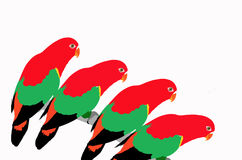 Arts of parrots on white background Royalty Free Stock Images