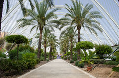 Arts and Science Center in Valencia. Garden at the City of Arts and Science in Valencia, Spain Stock Images