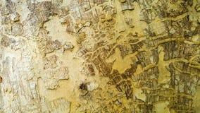 Arts of tree bark. Beautiful texture arts of nature tree bark Royalty Free Stock Photo