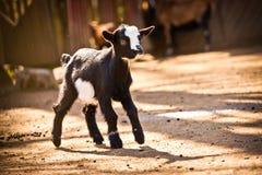 Dzieciak kózki Fotografia Stock