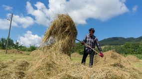 Farmer working with piles of straw in open field farm, Artvin, Turkey royalty free stock photography