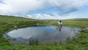 Man riding a horse inside a small pond in Savsat, Artvin, Turkey royalty free stock photography