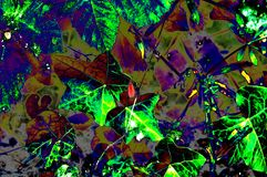 Artwork of coloured leaves in various colours royalty free illustration