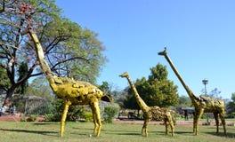 Artwork made by waste iron material. Giraffe- Artwork made by waste iron material in Bhopal, India stock photo
