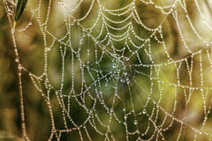 Artwork of nature. Spider web with water drops in front of colorful background Royalty Free Stock Photo
