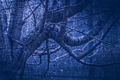 Artwork in painting style, gloomy wood in dark blue tones Royalty Free Stock Image