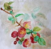 Artwork painting in watercolor of a branch with red blossoming flowers royalty free illustration