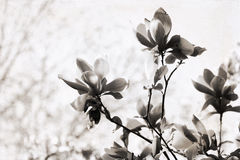 Artwork in retro style,  magnolia Royalty Free Stock Photos