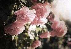 Artwork in retro style,  roses Stock Image