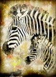 Grunge zebra Stock Image