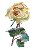 Artwork watercolor flowers roses Stock Photo