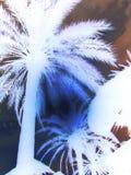 Arty słońce przez fronds negatywnych obraz royalty free