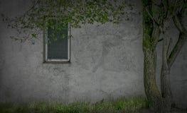 Arty-Wand-Fenster und Baum lizenzfreie stockfotografie