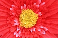 artyficial λουλούδι ανασκόπηση&sigmaf Στοκ εικόνες με δικαίωμα ελεύθερης χρήσης