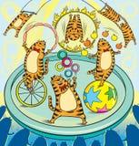artystów kotów cyrka czerwień Obrazy Royalty Free