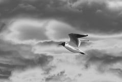 Artystyczna fotografia dziki ptasi latający oddolny zdjęcia stock
