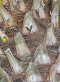 Artystyczna tekstura drzewna barkentyna zdjęcia royalty free