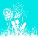 Artystyczna wersja dandelion Obraz Stock