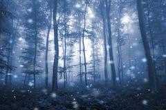 Artystycznego błękitnego koloru lasowego drzewa mgłowa bajka Fotografia Royalty Free
