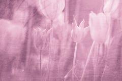 Artystycznej grunge menchii czerwieni tulipanów zamazany tło fotografia royalty free