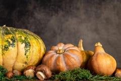 Artystyczny sezonowy zbliżenie bania i butternut z przestrzenią rocznik kopii i tła fotografia stock