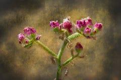 Artystyczny tło kwiaty Obraz Royalty Free